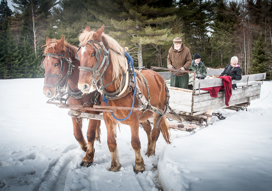 Horse-drawn sled