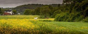 Morning Pasture